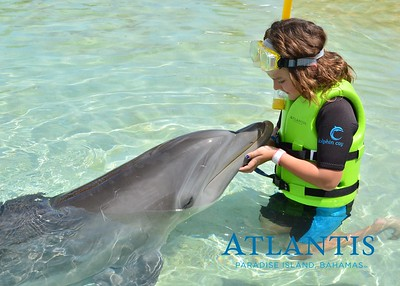 Atlantis-ATLANTIS-Dolphin Encounter Lagoon 1 Pod A-id194655722_withBorder