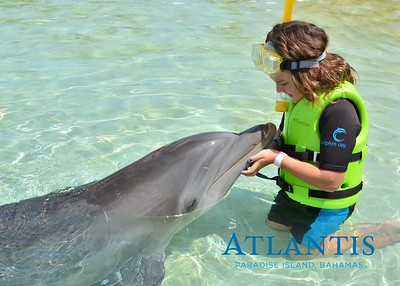 Atlantis-ATLANTIS-Dolphin Encounter Lagoon 1 Pod A-id194655723_withBorder