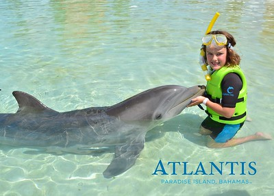 Atlantis-ATLANTIS-Dolphin Encounter Lagoon 1 Pod A-id194655728_withBorder