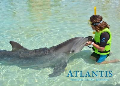 Atlantis-ATLANTIS-Dolphin Encounter Lagoon 1 Pod A-id194655726_withBorder