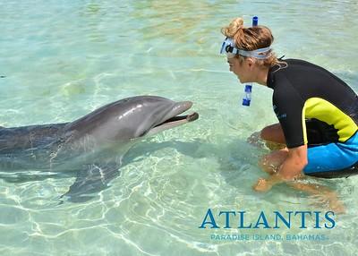 Atlantis-ATLANTIS-Dolphin Encounter Lagoon 1 Pod A-id194655721_withBorder