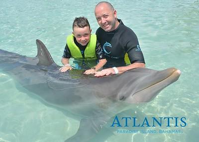 Atlantis-ATLANTIS-Dolphin Encounter Lagoon 1 Pod B-id194655941_withBorder