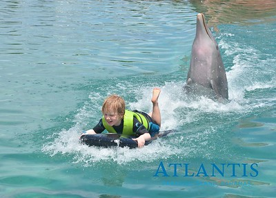 Atlantis-ATLANTIS-Dolphin Encounter Lagoon 1 Pod B-id194655672_withBorder