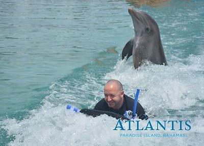 Atlantis-ATLANTIS-Dolphin Encounter Lagoon 1 Pod B-id194655704_withBorder
