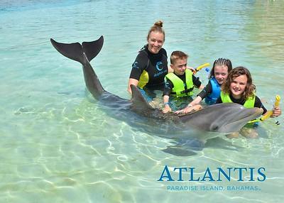 Atlantis-ATLANTIS-Dolphin Encounter Lagoon 1 Pod A-id194655766_withBorder