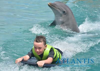Atlantis-ATLANTIS-Dolphin Encounter Lagoon 1 Pod B-id194655671_withBorder