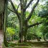 Jardim Botânico Green
