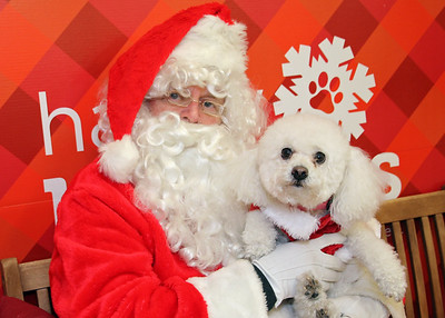 IMG_3562 Santa Jeff and Bichon
