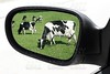 rearview car driving mirror view meadow cow