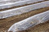 sprouts greenhouse glass house plastic lines