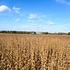 BEIER FARMS