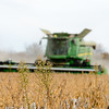 MARESTAIL & SOYBEANS