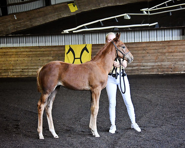 AHS 20 Delphina filly 8921