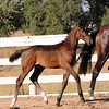 Stedinger-Donna Lucchetti Colt : Welcome to the Lucchetti Ranch AHS INspection Photo Galleries.  