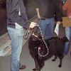 Awwww look at Ebony Boo, such a cute pup.