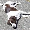 summer-pet-tips-8948