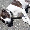 summer-pet-tips-8933