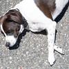 summer-pet-tips-8949