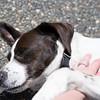 summer-pet-tips-8959