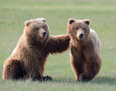 Bear friends.