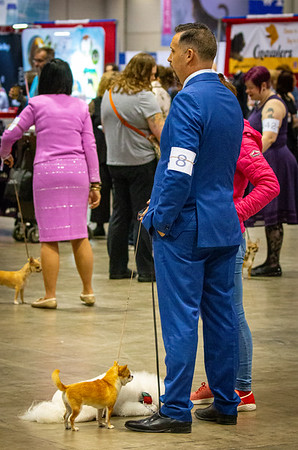 AKC National Championships