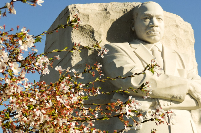 Cherry blossoms and Martin Luther King  Memorial