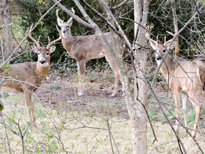 Backyard bucks