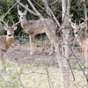Backyard bucks