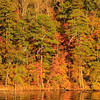 AL GUNTERSVILLE LAKE GUNTERSVILLE STATE PARK LAKE GUNTERSVILLE TOWN CREEK OCTJJ_MG_8216MbmmW