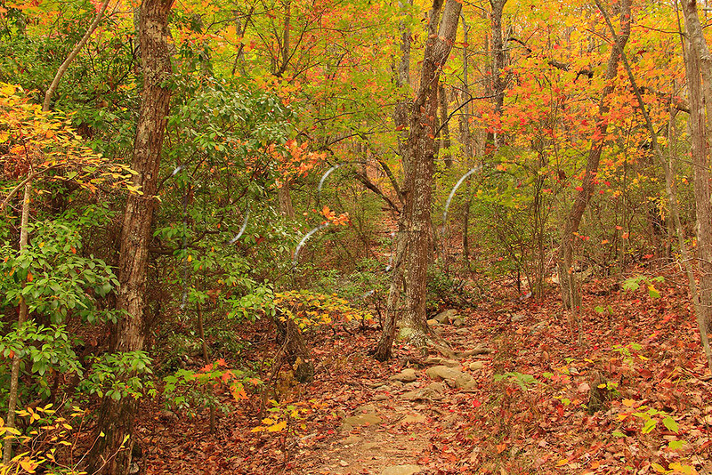 AL DELTA TALLADEGA NATIONAL FOREST NEAR CHEAHA STATE PARK PINHOTI TRAIL ENTRANCE TO CHEAHA WILDERNESS OCTJJ_MG_6563MbmmW