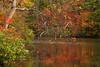 AL FORT PAYNE DESOTO STATE PARK LAKE AT DESOTO FALLS OCTJJ_MG_4044MbmmW