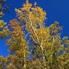 AL GUNTERSVILLE LAKE GUNTERSVILLE STATE PARK CASCADE TRAIL OCTJJ_MG_8012MbmmW