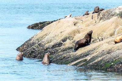 Sea lions in Glacier Bay National Park.