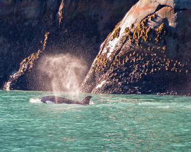 Following orcas.