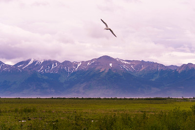 Potter's Marsh, Anchorage-Seward Rd