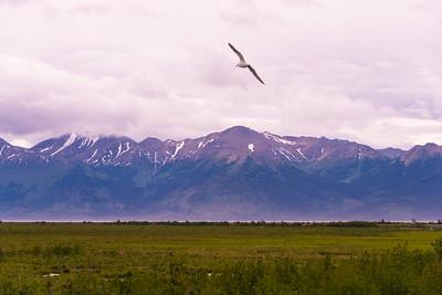 Potter's Marsh, Anchorage-Seward Rd