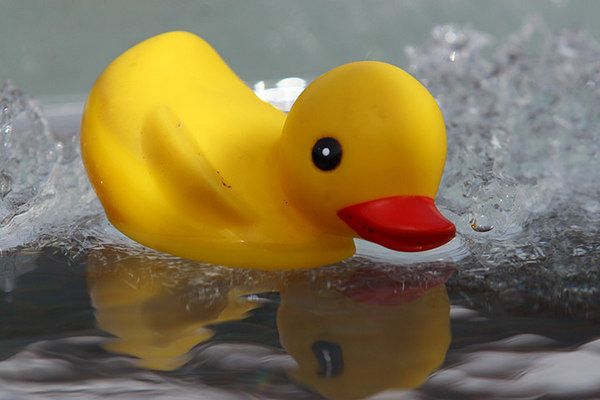 ducky0041