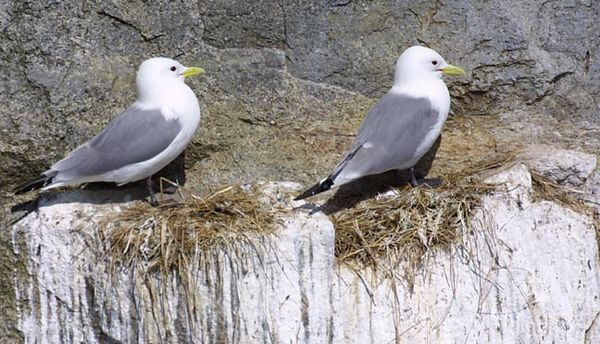 gulls9212