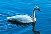 Swan 2-28-07
