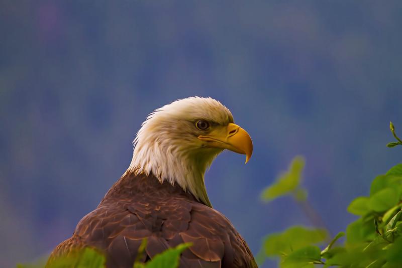 Eagle2 6-17-13