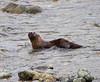 Otter1-5-06(3)