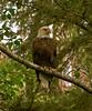 EagleB6-26-05