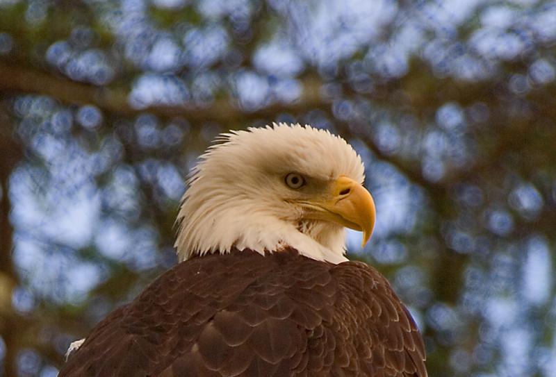Patient Eagle2