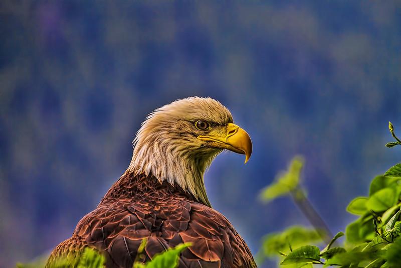 Eagle 6-17-13