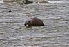 Otter1-5-06