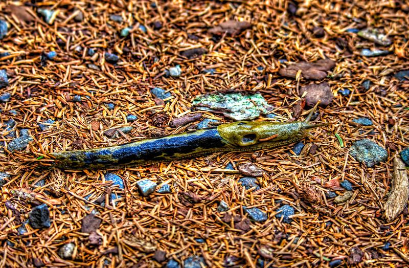 Banana Slug 5-29-11