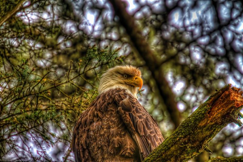 Eagle 6-1-12