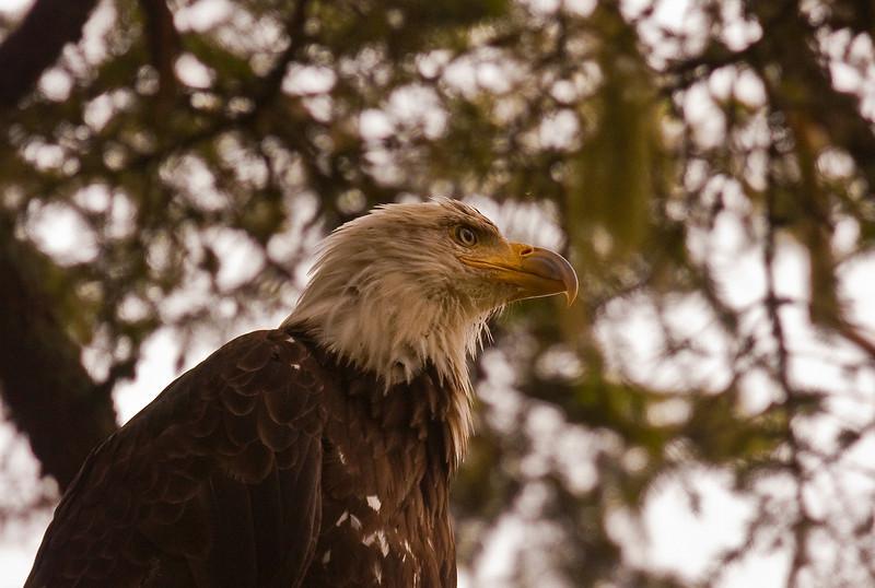 Eagle7-26-09A