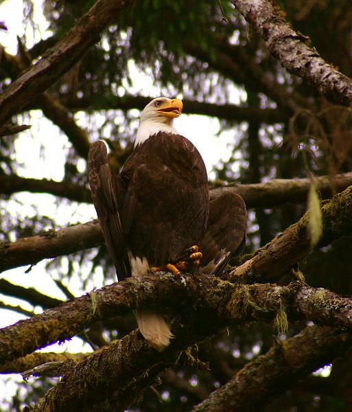 HappyFace Eagle