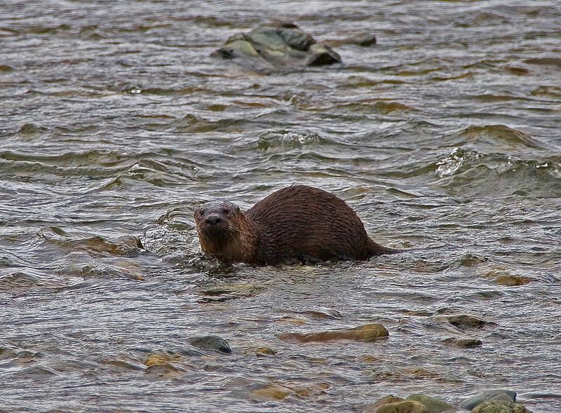 Otter1-5-06(4)